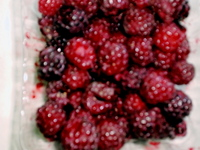 Bilyeu Purple Raspberries.JPG