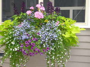 wiernik window box.JPG