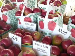 Thumbnail image for wiernik.apples .JPG