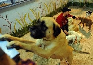 Thumbnail image for Dog_Daycare_2.jpg