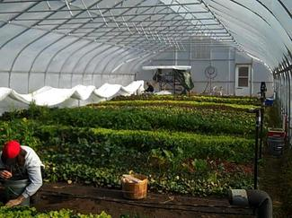Borden - Brines view of greenhouse
