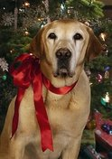 Thumbnail image for holiday-pet-photo.jpg