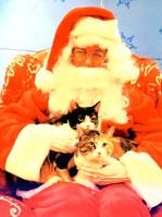santa_and_cats1.jpg