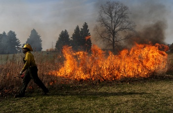 Buhr-Park-Wet-Meadow-Control Burn-2-MRM.jpg