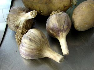 Harvest Kitchen_garlic.jpg