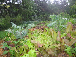 Lettuce-and-Kale-May-2010.JPG