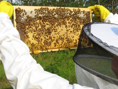 Charmant Backyard Beekeeping | Photo Courtesy Of Maggie Smith