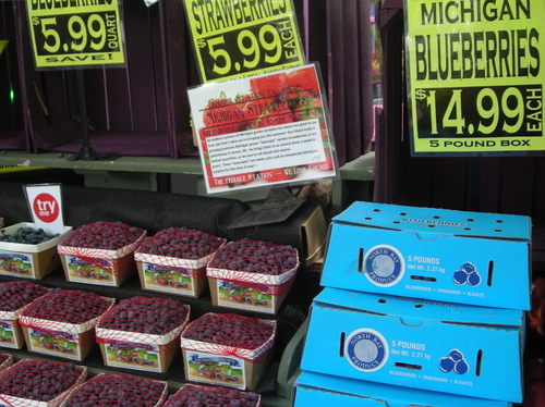 Borden - Pictures of Michigan Blueberries