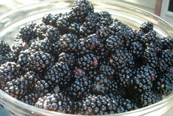 Borden - Bowl of Blackberries