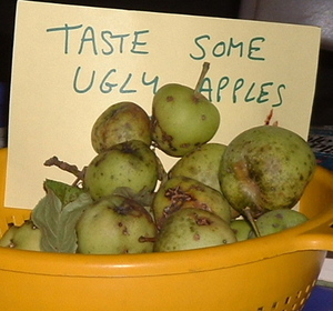 What to do with ugly apples. – JenDog