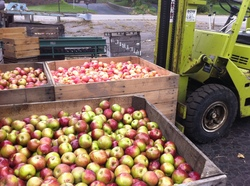 Borden - Apples waiting to be pressed at the Dexter Cider Mill