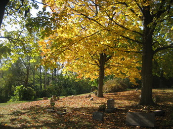 Autumn-trees-cemetery.JPG