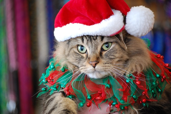 pet gifts help make for a purrfect christmas ann arbor pet supply stores see uptick in holiday sales