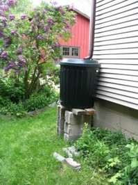 Rain barrel with Lilac