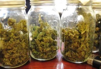 Thumbnail image for medical_marijuana_A2P2C2_Jan_2011.jpg