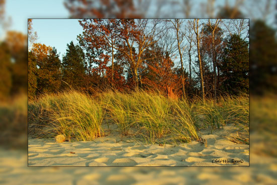 dune-grass-sanity550framed.jpg