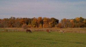 Lundberg-Ann-Arbor-Horses-in-Field-April-2011