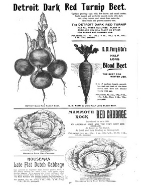 DMFerry.1894SeedAnnual.BeetandCabbage.jpg