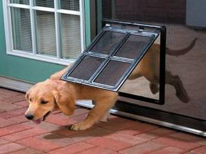 doggie door.jpg