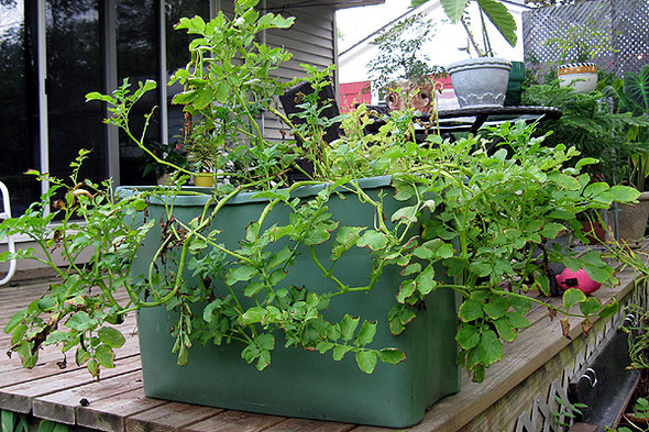 Grow A Vegetable Garden In Pots Plastic bins old drawers and used containers make great garden pots workwithnaturefo