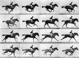 Lundberg-Horse-Motion-Pictures-2011