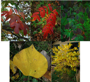 fall shrubs collage2 copy.jpg