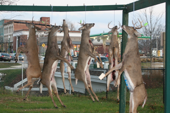 buck pole with deer 004.JPG