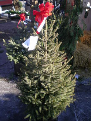 Ann Arbor to get your Christmas tree