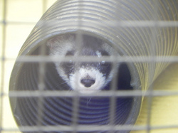 January-2012-Alexander-ferret tube.jpg