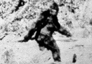 Bigfoot in Michigan? Animal Planet seeks him; Washtenaw County has had