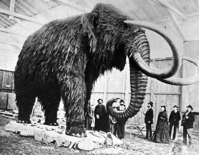 woolly_mammoth.jpg