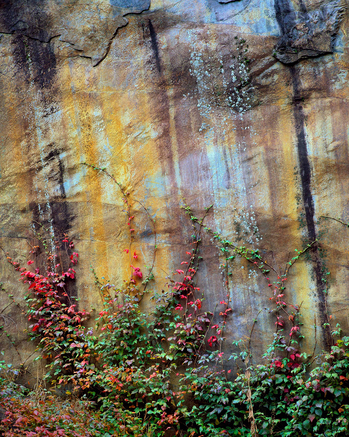 John-Lilley---Red-Leaves,-Yellow-Rock-Wall-sm.jpg