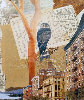 Hawk-in-the-City-collage-11x9.5.jpg