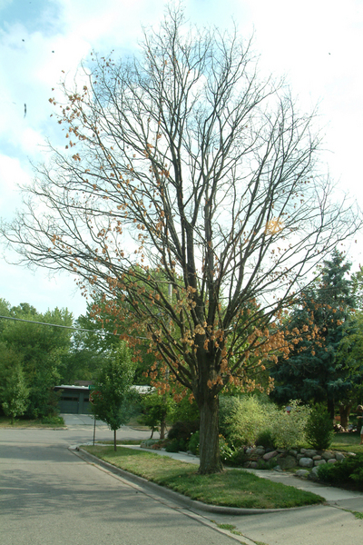 081512_DROUGHT_TREES.jpg