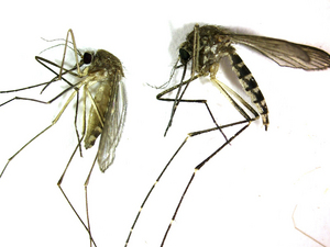 082412_WESTNILE.JPG
