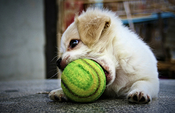 February-2013-Dr.Alexander-puppy with ball