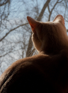 Dr. Alexander-March 2013-Silhouette Cat- Pet Hospice.jpg