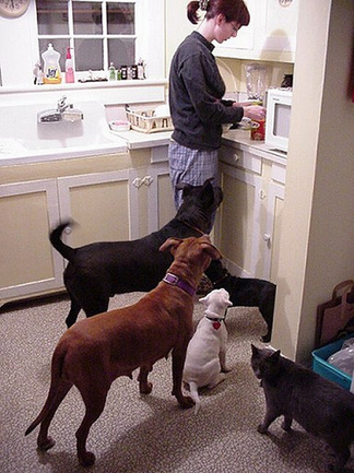 EraPhernalia Vintage dog kitchen.jpg