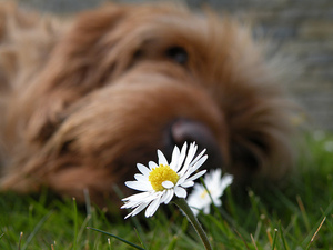 Thumbnail image for Dr. Alexander- August 2013- Itchy Dog- Flower.jpg