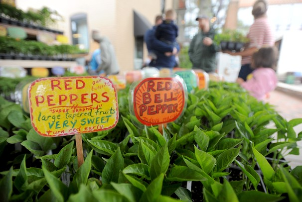 A variety of pepper seedlings on sale at the Frog Holler Organic Farm stand at the first Wednesday Ann Arbor Farmers Market of the year on Wednesday morning in Ann Arbor. Angela J. Cesere | AnnArbor.com