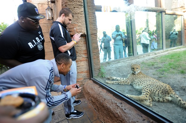 South Carolina defensive tackle Byron Jerideau, Michigan wide receiver Roy Roundtree and kicker Brendan Gibbons check out the cheetah exhibit at Busch Gardens in Tampa, Fla. on Saturday, Dec. 29. Melanie Maxwell I AnnArbor.com