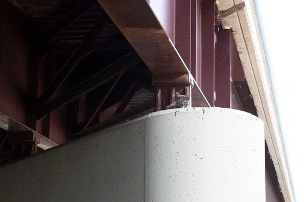 A cat is seen sitting on a concrete pylon under an overpass along I-94 on Tuesday. Photos courtesy of Humane Society of Huron Valley