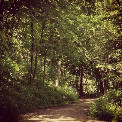 The sun shines through the trees along a path at Nicholas Arboretum. (klevrgirl)