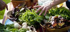 A customers touches fresh lettuce at the Seeley Farm table during the Cobblestone Farm Farmers Market on Tuesday, May 21. Daniel Brenner I AnnArbor.com