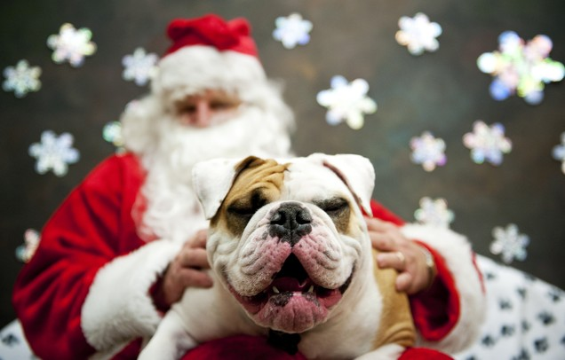 Image result for dog with santa