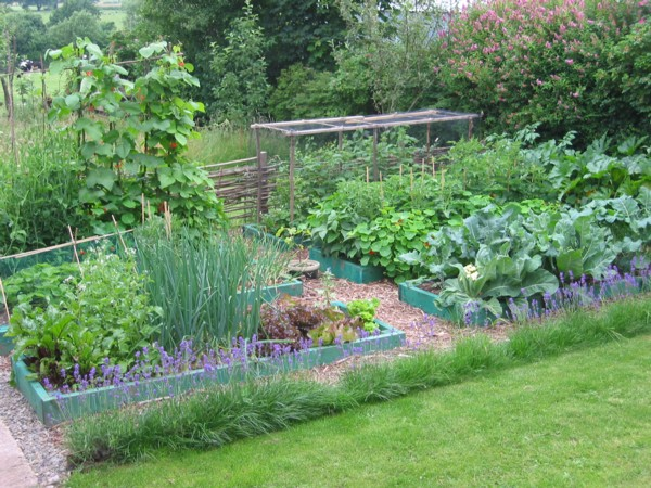 Backyard Vegetable Farming : thrilled to announce the launch of my new Permaculture Blog, or